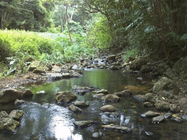 Maunawili Falls Trail